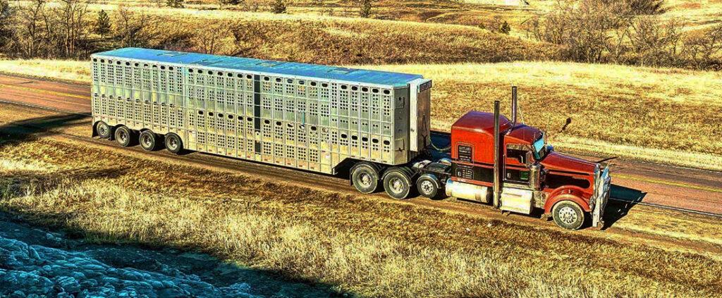 Как живет и работает перевозчик бизонов 6