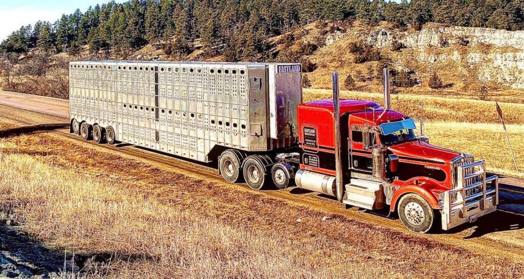 Как живет и работает перевозчик бизонов 4